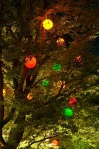 The weatherproof and robust lampion Barlooon at the Bergkirchweih in Erlangen at the cellars in the trees in size L and different colours.