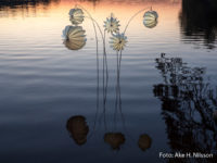 The weatherproof and robust Lampion Barlooon on the Swedish lake